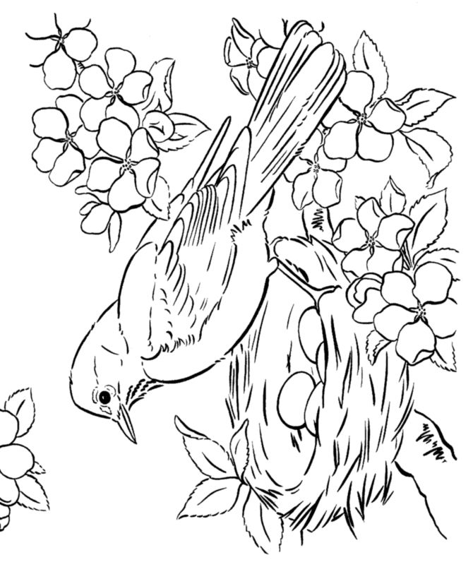 page of bird in spring with eggs the nest coloring pages