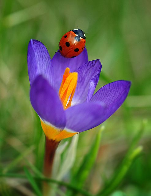 Ladybird | Flickr: Intercambio de fotos