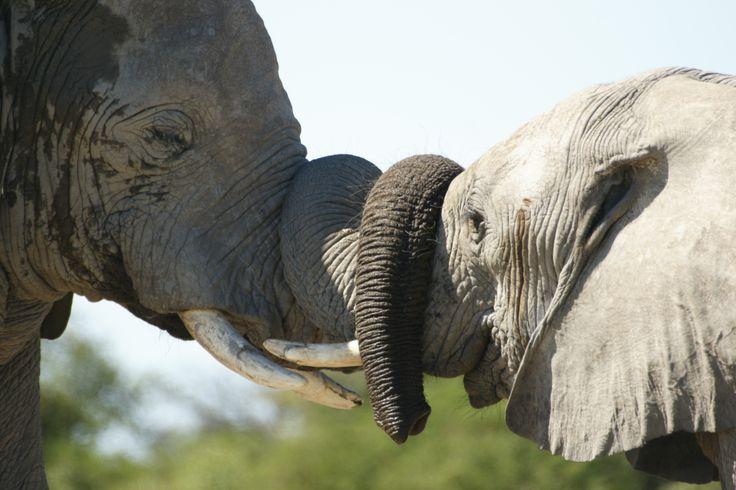 Loving elephants http://triptide.co.za/