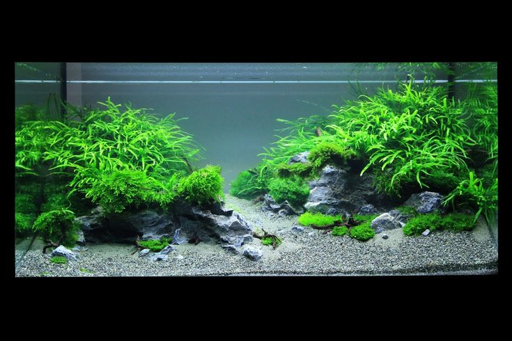 Iwagumi stenen google zoeken aqua takashi amano for Planted fish tank