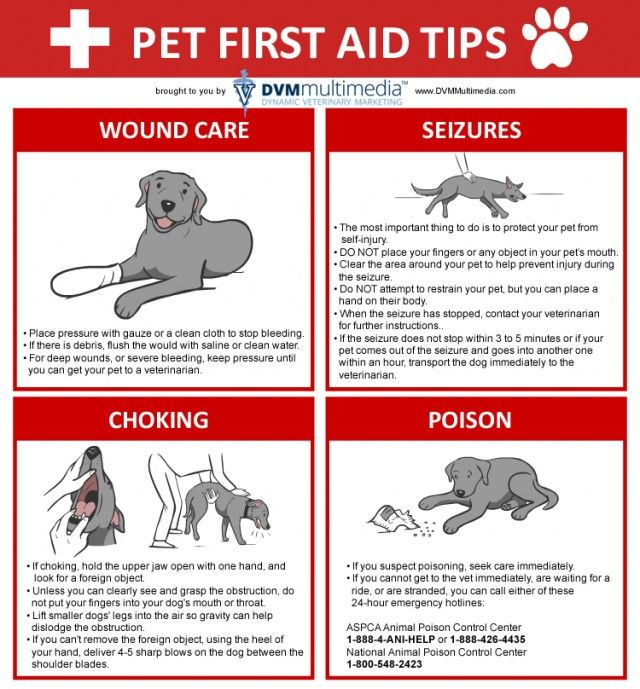 Pet First Aid Tips #Infographic