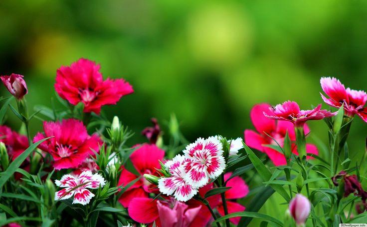 wallpapers for desktop background flowers - http://hdwallpaper.info/wallpapers-for-desktop-background-flowers/ #Flower HD Wallpapers