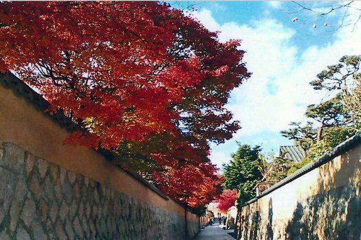 秋 紅葉 城下町 castle town, Cyoufu, Yamaguchi