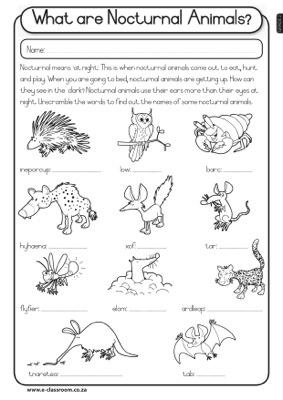 CAPS-Grade2-Lifeskills-Term4-LIFE-AT-NIGHT-Nocturnal Animals