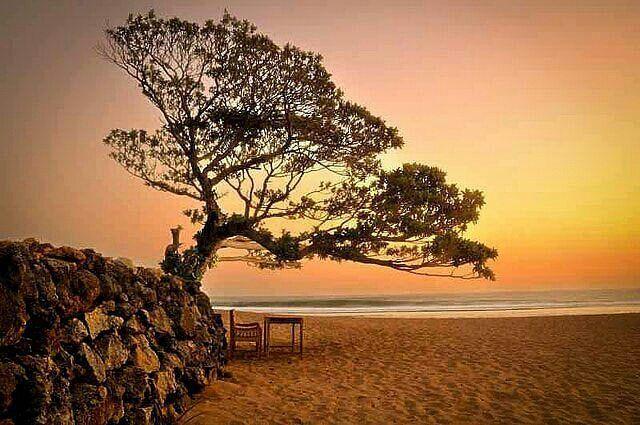 Pantai Pok Tunggal Yogyakarta Pantai Indah yang Cocok serta Ramah di Kantong untuk Libur Akhir Tahun  Lokasi dan Rute