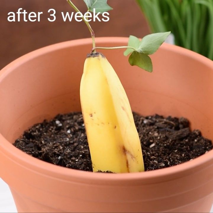 Grow your own fruit hybrids!  by  – Crafts Ideas Videos  #crafts #fruit #hybrids…