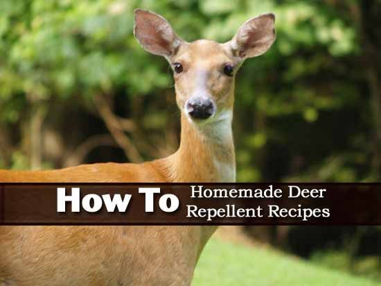 270 best images about bug off on pinterest gardens - How to keep deer out of garden home remedies ...