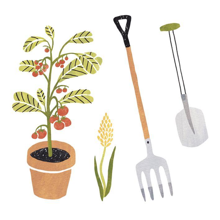 Garden illustrations for Libelle magazine by Sanny van Loon | plants | garden tools | tomatoplant  www.sannyvanloon.com
