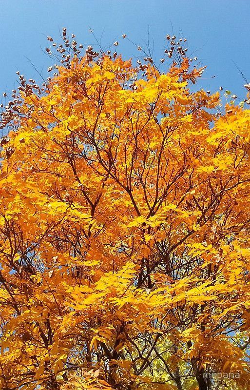 Feel the Autumn with Golden Autumn