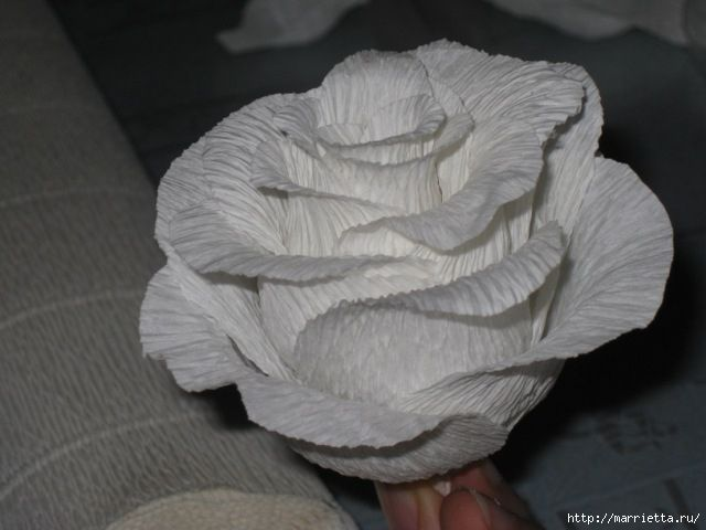 Очень красивые розы из гофрированной бумаги (10) (640x480, 131Kb)