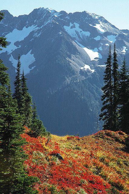 Mt Skokomish, Olympic National Forest, Washington; photo by Crest Pictures