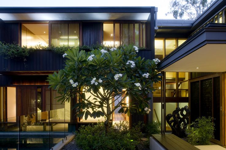 Samford House: Courtyard space with frangipani  tree. See more at http://blighgraham.com.au/projects/samford-house-1