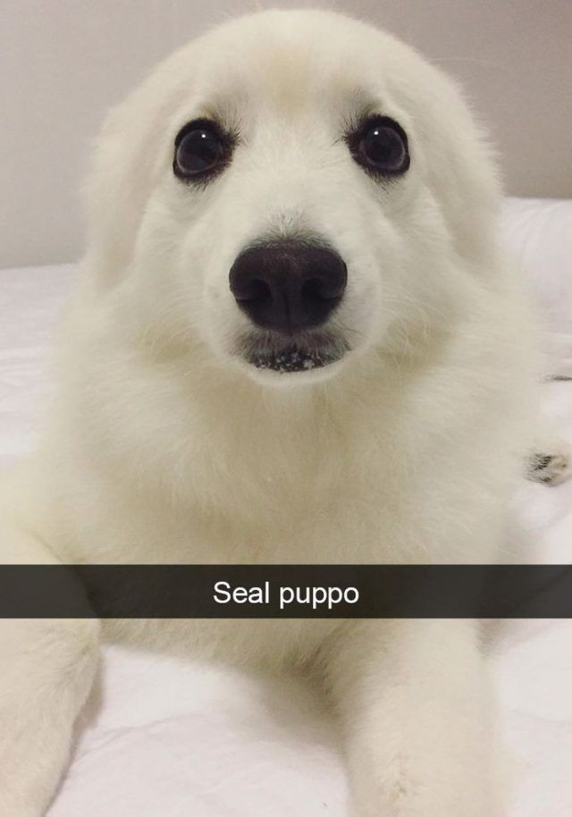 Funny Snapchats Dog Photo - 190 Pics – Funnyfoto   Funny Pictures - Videos - Gifs - Page 75