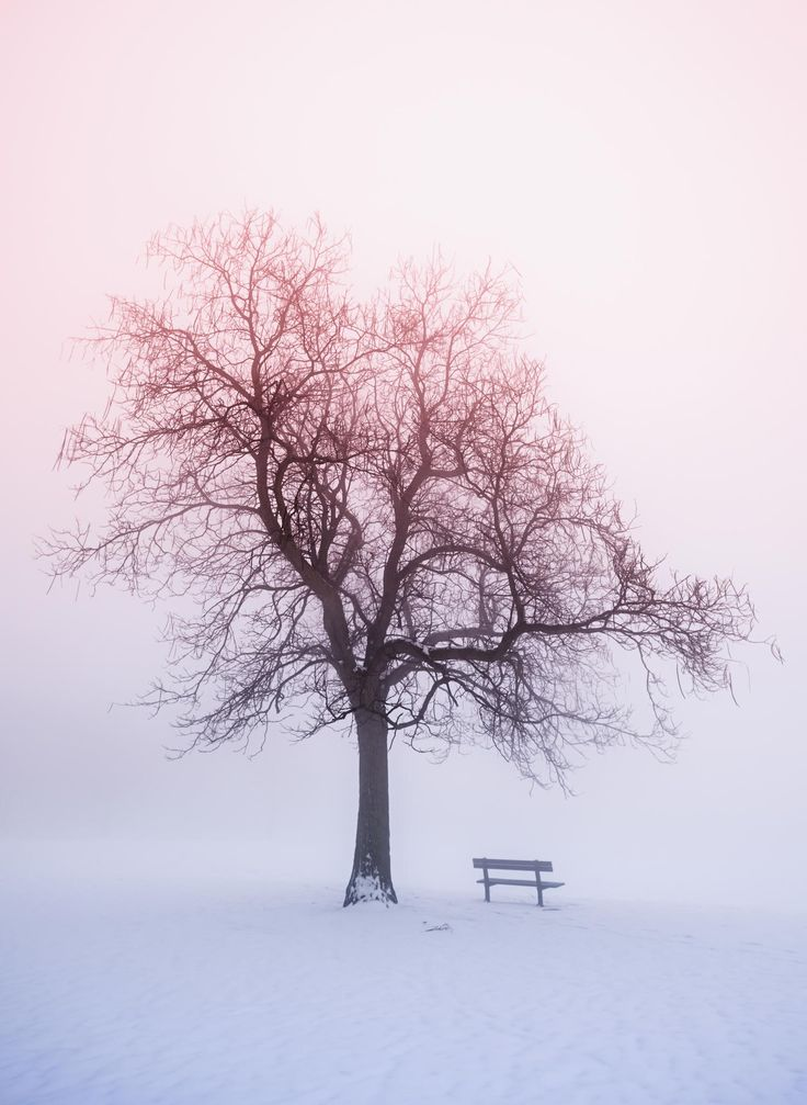 Winter tree in fog at sunrise by Elena Elisseeva on 500px