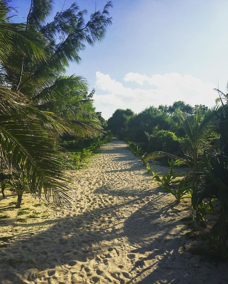 ���� Peaceful stroll in Vanuatu #clouds #beautiful #green #trees #sand #sunny #sunset #blue #water #ocean #stroll #walk #Mysteryisland #Vanuatu #beach #most_amazing_planet #paradise #holidays #amazing #stunning #celebrity #cruise #celebritycruises #photography #nature #instagood #picoftheday #traveling #travelgram #excited http://tipsrazzi.com/ipost/1506457360553913816/?code=BToAvzlFq3Y