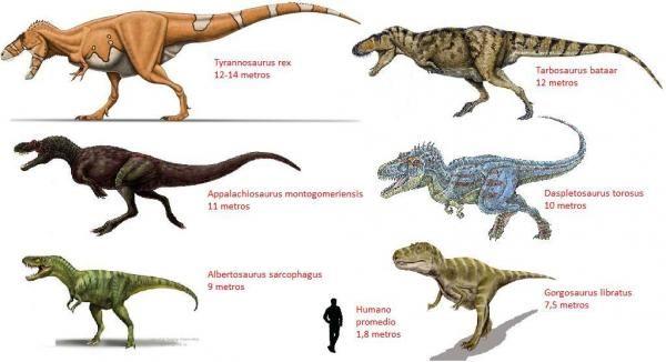 Dinosaurios carnívoros - nombres y características