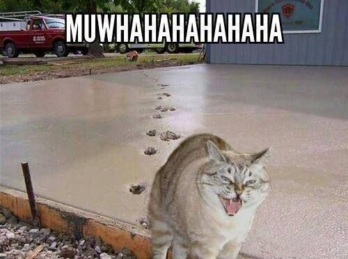 I sometimes swear cats can understand English.