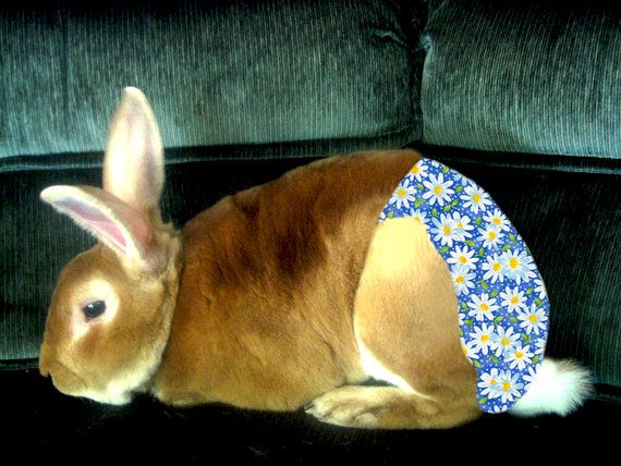 Blue Daisy Rabbit Diaper For Albert Bunny Rabbit