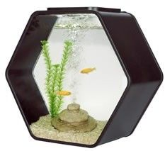 Deco Hexo Hexagon Fish Tank Black £64.99    Quantity      Product Name: Deco Hex    Description: Deco Hexagonal fish tank 15 litre.    Designer aquarium Magic touch lighting feature for home, office and shops    Made by clear glass  Magic touch lighting feature  Advance lighting with High Power LED: Sun-like Shimmering Ripples creates a very relaxing environment  Blue LED's create Moonlight Effects at night  Built-in filtration unit is hidden in tank décor.