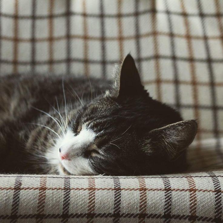 My all time favorite studio companion studiocat for Location monte meuble paris