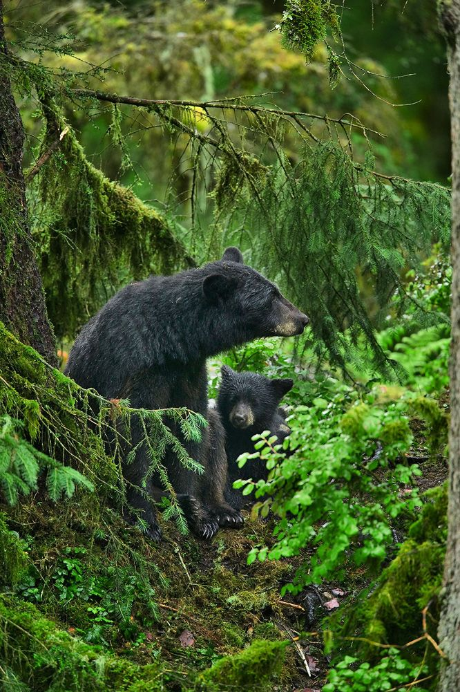Alaska Vistas - Adventure Travel, Bear Viewing, Wildlife Viewing