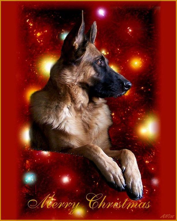 210 best German Shepherd Dogs Health Care images on Pinterest ...