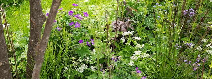 The Willmott Whyte Garden