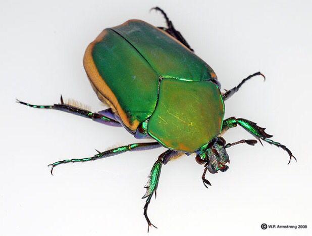 June bug                                                       …