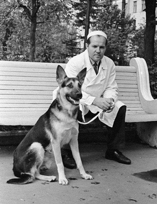 Владимир Демихов и собака Гришка. в 1962 году пес Гришка сумел прожить с двумя сердцами почти пять месяцев. Погиб он в результате идиотской случайности: пьяный больничный плотник забрался в операционную, Гришка его облаял, а плотник в ответ ударил собаку в область пересаженного сердца.