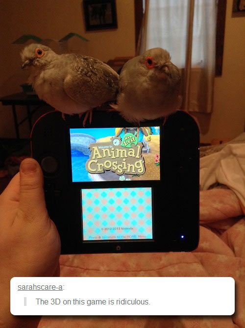"Nintendo REALLY outdid themselves with this new installment of ""Animal Crossing,"" huh? The 3D is so amazing, it almost feels like the animals are here with me! (Funny side note from a gamer nerd: That is a Nintendo 2DS, meaning the 3D wouldn't show up on it, but still, this is awesome.)"