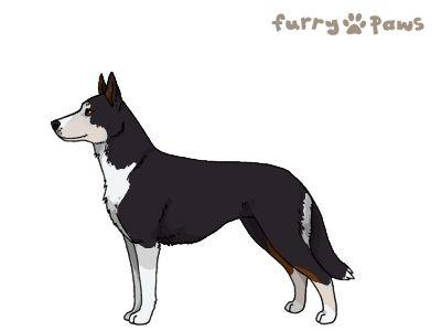 Furry Paws // WCFl Kip's Lingan [3STM 20HH 1.593] 7.0 *BoB*'s Kennel
