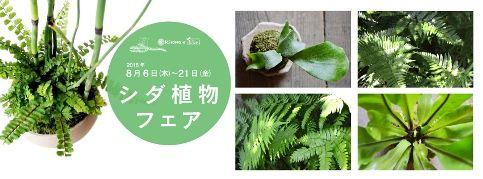 シダ植物フェアはじまりました : Kitowaの日々