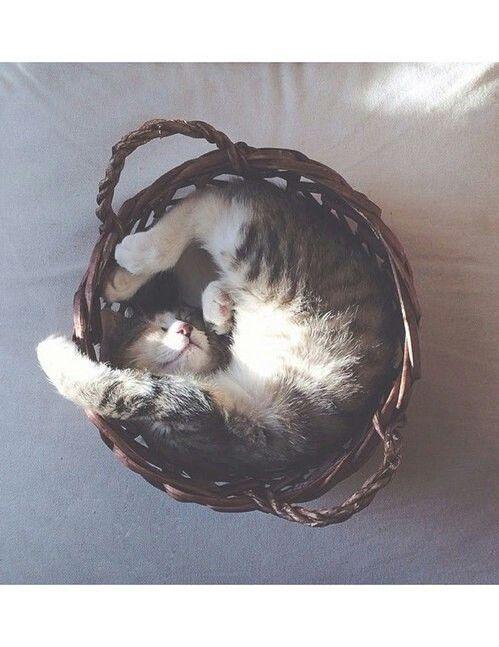 So Cute!!! Meow.. I can take a nap where ever I want to. Watch me. I will curl up in a ball and go to right to sleep.