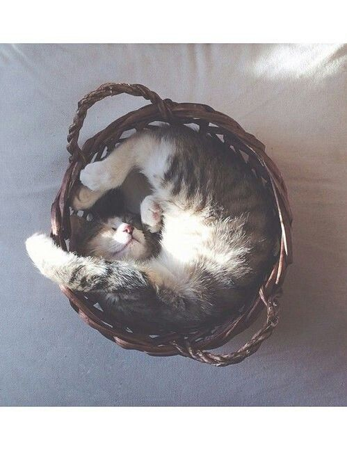 So Cute!!! Meow.. I can take a nap where ever I want to. Watch me. I will curl up in a ball and go to right to sleep.