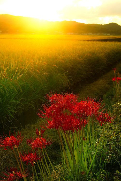 627 Best The Red And Yellow Cottage Images On Pinterest