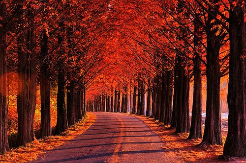 Pics For > Beautiful Nature Photography Tumblr | Trees ...
