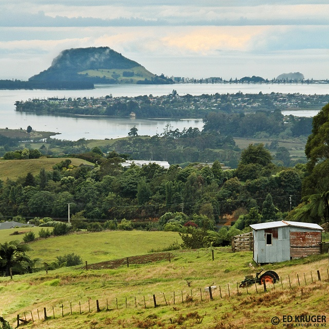 Farm in Te Puna, near Tauranga city, New Zealand, with beautiful background view of Mt Maunganui