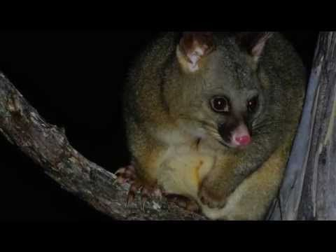 Pests can lead to... Native Forest Collapse video from Forest and Bird