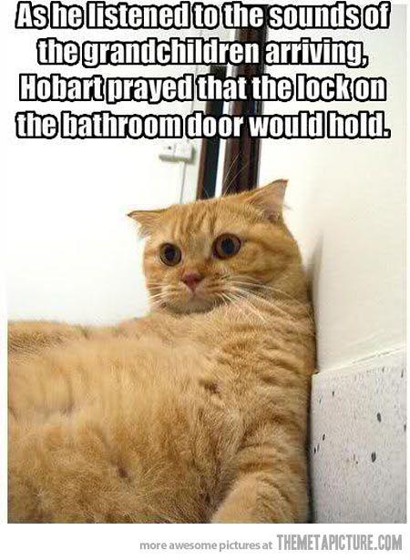 Poor traumatized cat! LOL