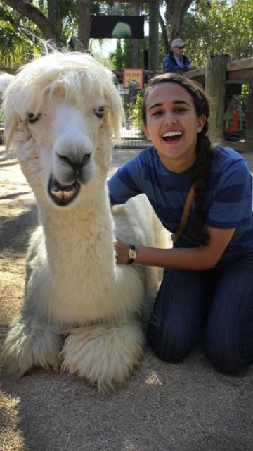 alpaca, I shall steal you.