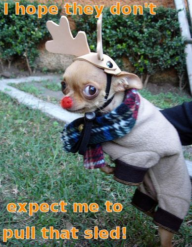 http://www.funnyfidos.com/category/dogs-dressed-up/page/2/