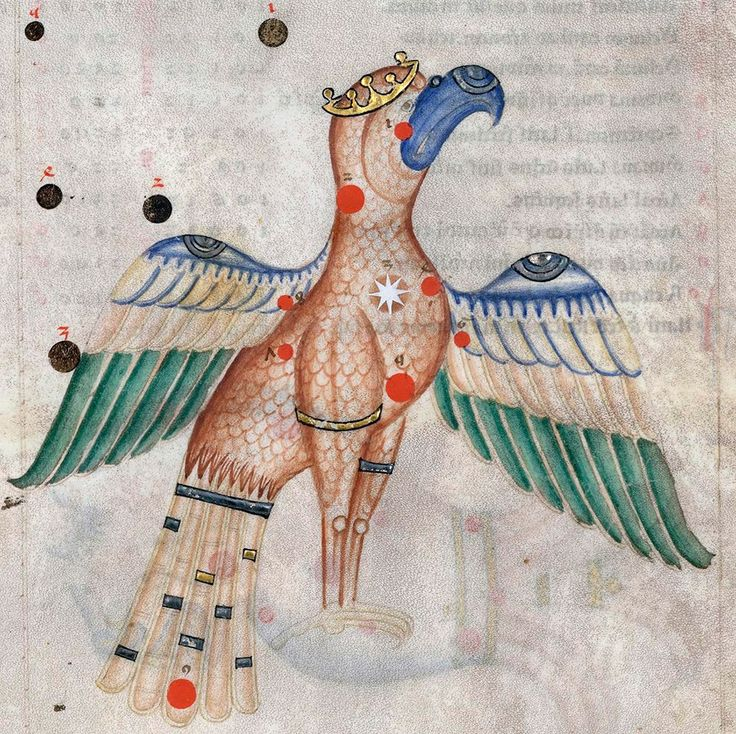 Constellation Aquila. Sufi Latinus (Latin translation of 'Kitāb al-kawākib al-thābita' of 'Abd al-Rahmān al-Ṣūfī), Bologna 1250-1275 (BnF, Arsenal 1036, fol. 14r)