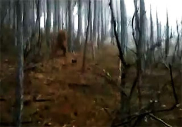 5 Collections of Paranormal Videos That Will Scare Your Pants Off: Bigfoot Videos