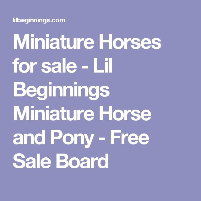 Miniature Horses for sale - Lil Beginnings Miniature Horse and Pony - Free Sale Board