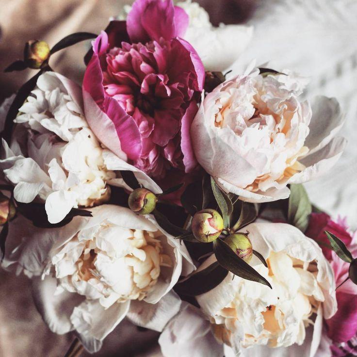 """Возвращаемся к цветочно-свитерочной тематике 😘💜🌹🌹🌹 Погода такая, что свитер или кардиган точно не помешает, ну или в шарф замотаться тоже неплохо 😏 И сразу хорошо так идти :локоны ветер треплет, а тебе тепло и модно, руку стаканчик кофе на  вынос греет ☕  Кто о кофе позаботился - вот вам цветочков для настроения, а для тепла и """"пофорсить""""  тег #естьbisknit  #вязанаяодежда #модныйсвитер #пионы #кофе #уютноеутро #такоевотхреновоелето #sweaterbisknit  #вязанаямода #теплыйсвитер #шарф"""