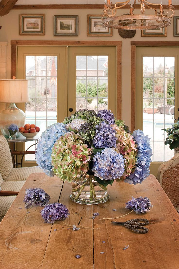 Tree borers amp bark beetles arborx tree health care - The Secret To Drying Hydrangeas And Other Botanicals