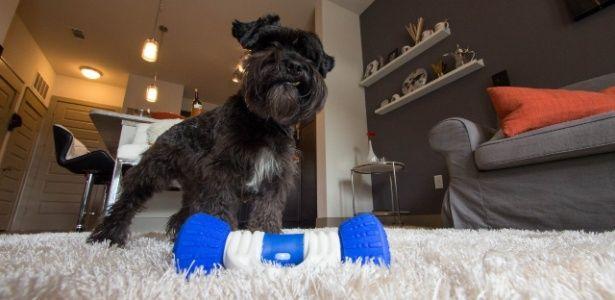 Cão sozinho em casa e entretido por horas? É o que promete este brinquedo