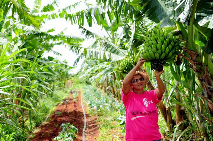 Brasília se prepara para o Congresso Latino-Americano e Brasileiro de Agroecologia - ABA Agroecologia