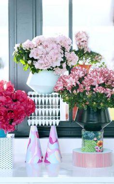 Zimmer-Azaleen bringen in der dunklen Jahreszeit mit ihrer Sorten- und Blütenfülle Farbe ins Haus. Mit der richtigen Pflege haben Sie lange Freude an der Zimmerpflanze.