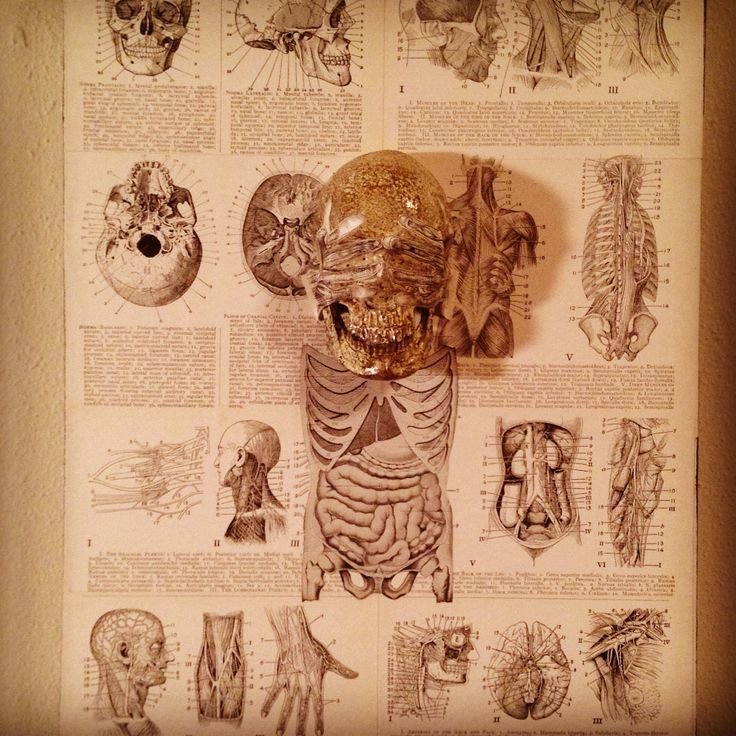 """""""Exposed by SKOLLTOR. Skull wall lowbrow art for upcoming exhibition."""